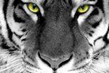 Uwaga! Tygrys wSeminarium!